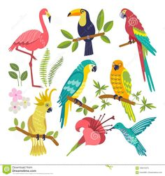 Set of tropical birds stock vector. Illustration of fashion - 109415373 Jungle Illustration, Graphic Illustration, Jungle Theme Classroom, Illustrator, Flamingo Bird, Tropical Pattern, Tropical Birds, Jungle Animals, Floral Illustrations