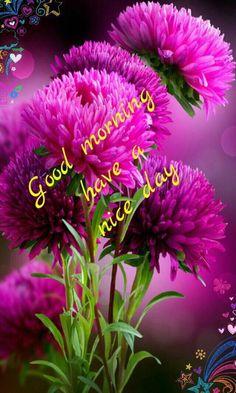 Praise the Lord hallelujah hallelujah hallelujah Amen Rare Flowers, Flowers Nature, Exotic Flowers, Beautiful Flowers, Purple Flowers, Orquideas Cymbidium, Good Morning Flowers, Plantation, Flower Wallpaper