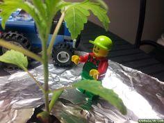 LEGO's May Soon Be Made From Hemp