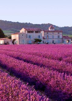 Plateau de Valensole, Provence, France.