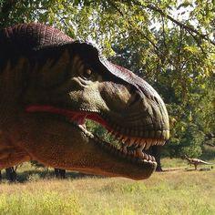 Snack time! #hearddinosaurs #hearddinos #mckinneytx #mckinney #paleontology #heardmuseummckinney #heardmuseum_mckinney #heardmuseum #heardnaturalsciencemuseum #nature_perfection #tx #texas #texasnature #texasphotos #theheardmuseum