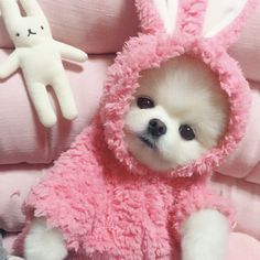 Everything About Playfull Pomeranian Puppy Health Super Cute Puppies, Baby Animals Super Cute, Cute Baby Dogs, Cute Little Puppies, Cute Dogs And Puppies, Cute Little Animals, Baby Puppies, Cute Funny Animals, Cute Cats