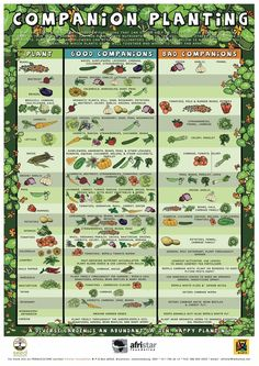 Gardening: Companion Planting Chart JUN 18 • EDIBLE YARDS, GROW IT YOURSELF, PERMACULTURE, RAISED BED GARDENING •