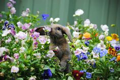 darksilenceinsuburbia:  Animals Sniffing Flowers~ because sometimes we've got to stop and smell the roses :)