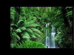 Tohumlar Fidana - YouTube