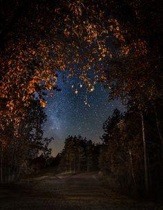 An autumn night walk