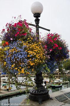 Lamp Post and Flowers by the Pier and Boardwalk in Victoria on Vancouver Island in British Columbia, Canada - These are even more gorgeous in person.