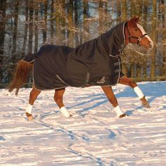 79 Masta Avante 340 Full Neck Heavy Weight Turnout Rug Graphite Rugs Winter