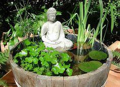 Vasca piante acquatiche