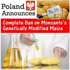 Following the anti-Monsanto activism launched by nations like France and Hungary, Poland has announced that it will launch a complete ban on growing Monsanto's genetically modified strain MON810. The announcement, made by Agriculture Minister Marek Sawicki, sets yet another international standard against Monsanto's genetically modified creations.