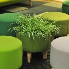 プランターにもなるスツール。The stool which changes to a planter.