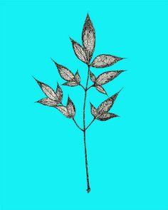 Leaf Ink Drawing - 8x10 print - Pen and Ink, Drawing, Black Lines, Leaves on Stem by Lynn Huerta