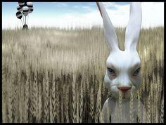 Dollcoco Demo & Rabbit