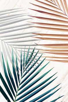 Silver with green and brown palm leaves patterned background Palm Leaf Wallpaper, Flower Background Wallpaper, Background Patterns, Wallpaper Backgrounds, Palm Background, Aesthetic Iphone Wallpaper, Aesthetic Wallpapers, Pink Leaves, Pattern Wallpaper