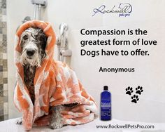 Compassion is the greatest form of love dogs have to offer. www.rockwellpetspr.com #Dog