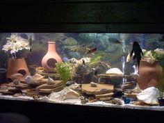 aquariurm setup for cichlids | aquarium fish compatible with african cichlids