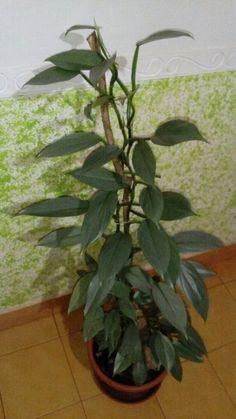 Mis plantas de interior.