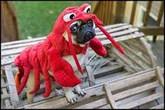 Image result for pugs in costumes