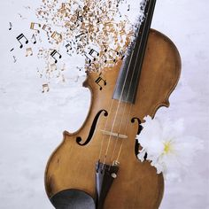 Violin Metamorphosis by Daisy Kwan on 500px