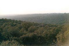 Vista de un encinar denso en elMonte del Pardo (España)