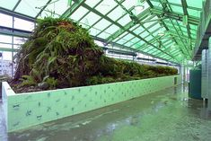 """""""Neukom Vivarium,"""" 2006  Mixed-media installation, greenhouse structure: 80 feet long. Installation view: Olympic Sculpture Park, Seattle. Gift of Sally and William Neukom, American Express Company, Seattle Garden Club, Mark Torrance Foundation, and Committee of 33, T2004.101  Courtesy the Seattle Art Museum"""