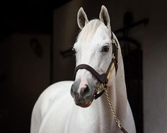 Tapit - Gainesway Farm                                                       …