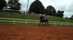 """""""Have you tried canter halt, or trot halt transitions yet? What can you do to improve them? Now you can watch as we teach an older horse how to do them more elegantly"""""""