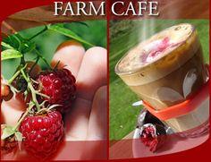 Raspberry Farm, cafe, near devonport Coast Australia, Australia Travel, Farm Cafe, Australia Landscape, I Love Chocolate, Lassi, Birthday Treats, Seafood Restaurant, Pavlova