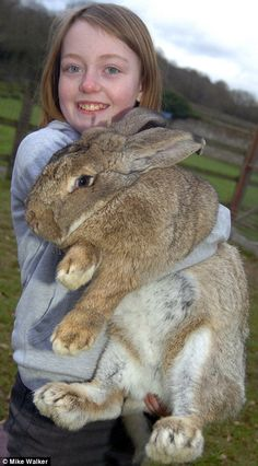 World's largest bunny in 2011, Ralph... Wow .. I hope Mallory's bunny doesn't grow this big : )