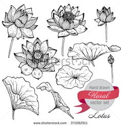 Vector set of hand drawn lotus flowers and leaves. Sketch floral botany collection in graphic black and white style - stock vector