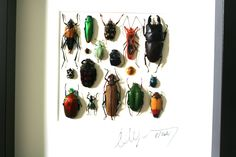 Artframe with real insects : Topquality display with mosaic of insects of the world FREE SHIPPING by Alanscollectibles on Etsy