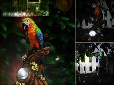 Solar Garden Lights is an importer and supplier of stylish solar powered lighting systems for South African Gardens. Lighting System, Solar Power, Bird Feeders, Parrot, Lights, Stylish, Garden, Outdoor Decor, Home Decor