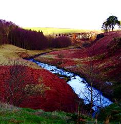 Mid Tyne walks from northumberland national parks website Northumberland National Park, Walking Routes, North East England, Walks, United Kingdom, National Parks, Sky, River, Mountains