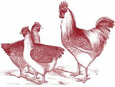 Free Vintage Chicken Graphics - plus TONS of other vintage graphics (frames, ornaments, signage etcs) - AWESOME site