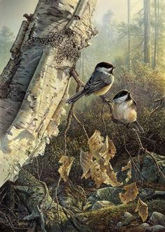 imagens-aves-passaros-passarinhos-birds