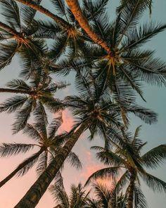 ENJOY THE PALM LIFE - USAPALM.COM