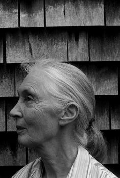 """jane goodall Steven Colbert: """"Are you trying to make me cry about trees? Kinds Of People, We The People, Good People, Jane Goodall, Beautiful Old Woman, Beautiful Inside And Out, Season Quotes, Original Copy, Student Portfolios"""