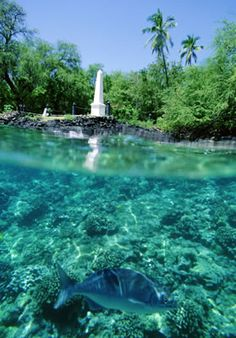 Kealakekua Bay, Captain Cook, Kona This water is SO clear, even out in the…