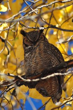 beautiful owl!!!!