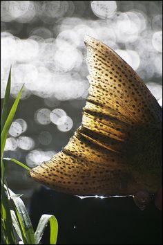 Fishtail.
