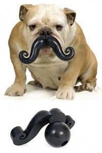 Mustache Chew Toy - I need to get this for my dog!