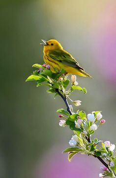"""""""A Bird with a song in his heart..."""""""