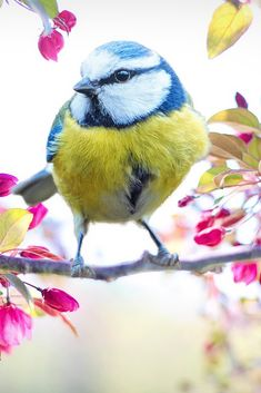 A beautiful cute spring bird #cute #bird #cuteanimals #TheWorldIsGreat