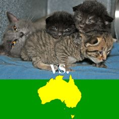 Find Photos Of Alley Cat Rescue Calls for Boycott of Australia And Much More At RachelMDLong.com