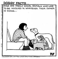 Dogs Are Highly Social Animals - Off The Leash by Rupert Fawcett