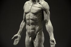 Amazon.com: Male Anatomy Figure: 11-inch Anatomical Reference for Artists (Grey)