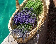 Lavender & Food - Megan's Cookin'    Recipes and various uses for one of my favorite flavors.
