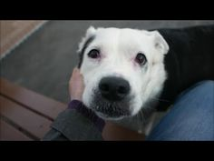 OREO – A1070295 | Help us Save NYC AC&C Shelter Dogs