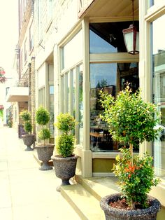 Monty's Tapas and Wine Den located in the village of Hespeler Cambridge Ontario, Best Salon, Tapas, Den, Relax, Restaurant, Plants, Beautiful, Diner Restaurant
