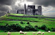 Rock-of-Cashel, Ireland   This amazing castle located at Cashel, County Tipperary, Ireland includes a Gothic cathedral, 12th century tower, and limestone outcrop–and sheep too!